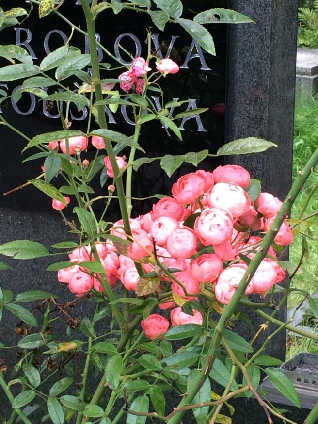 Hřbitov Holešovice